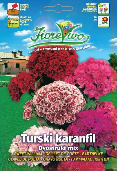 Turski karanfil dvostruki mix