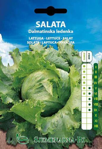 Salata Dalmatinska ledenka