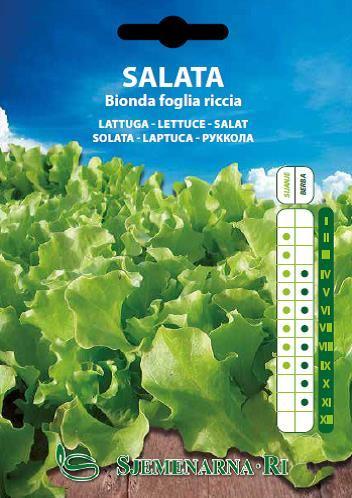 Salata Bionda a foglia riccia