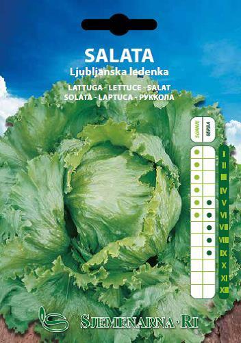 Salata Ljubljanska ledenka