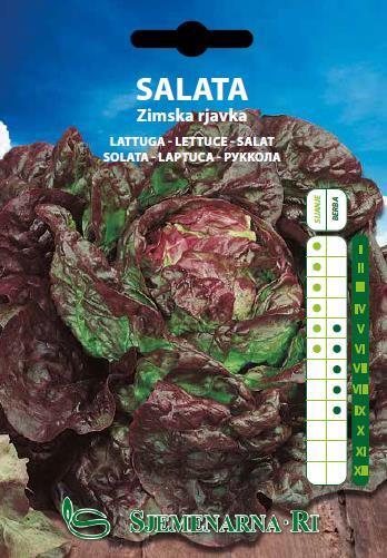Salata zimska smeđa