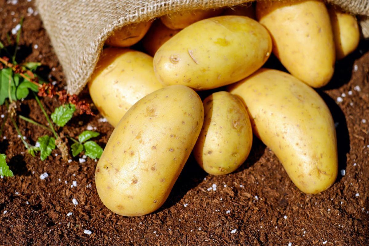 Sjemenski krumpir