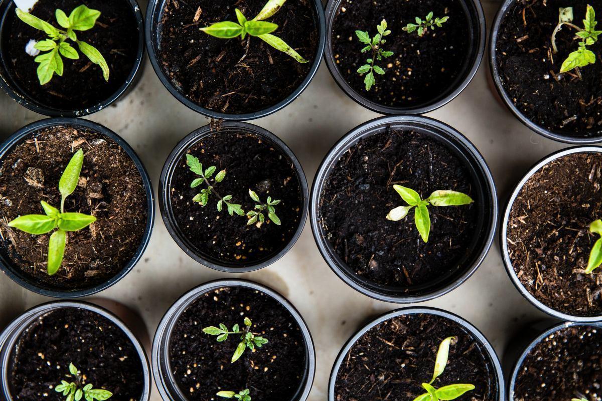 Vrhunska gnojiva za zdravlje i zaštitu vašeg bilja