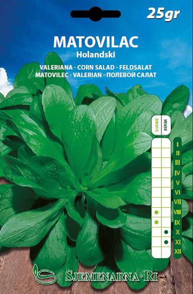 Matovilac Holandski-25 gr.